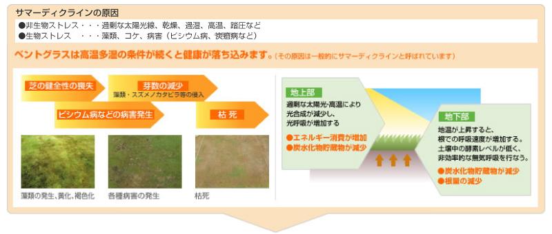 芝生の赤焼病、ピシウム病の防除に。 芝生用殺菌剤 シグネチャーWDG 1kg入り