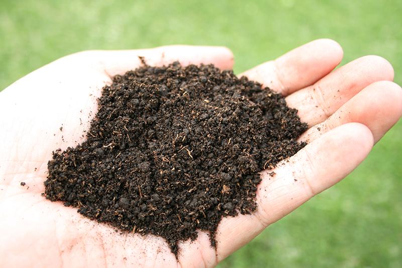 鮮やかな緑をつくる、バロネス 芝生の目土・床土