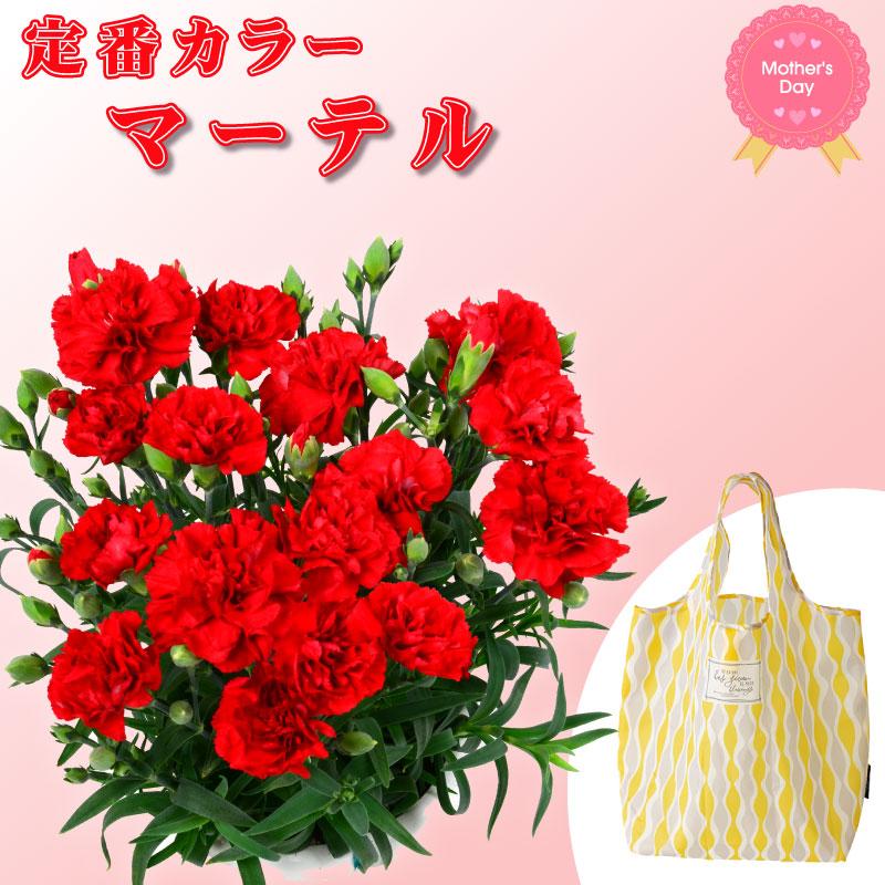 無料 日 母 送料 の 花 【母の日】カーネーション鉢【送料無料】 ■カーネーション鉢■